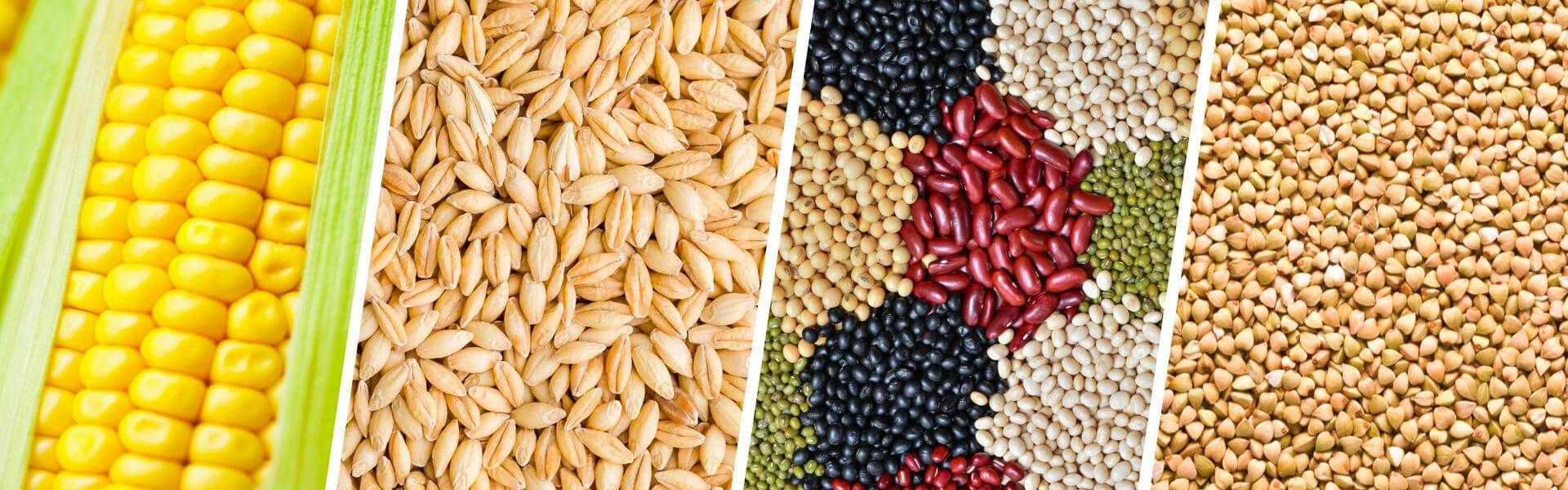 frutos que generan bioetanol