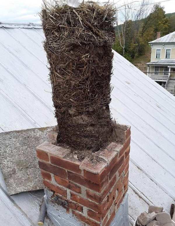 Un nido de pájaros puede provocar el roque de humo.